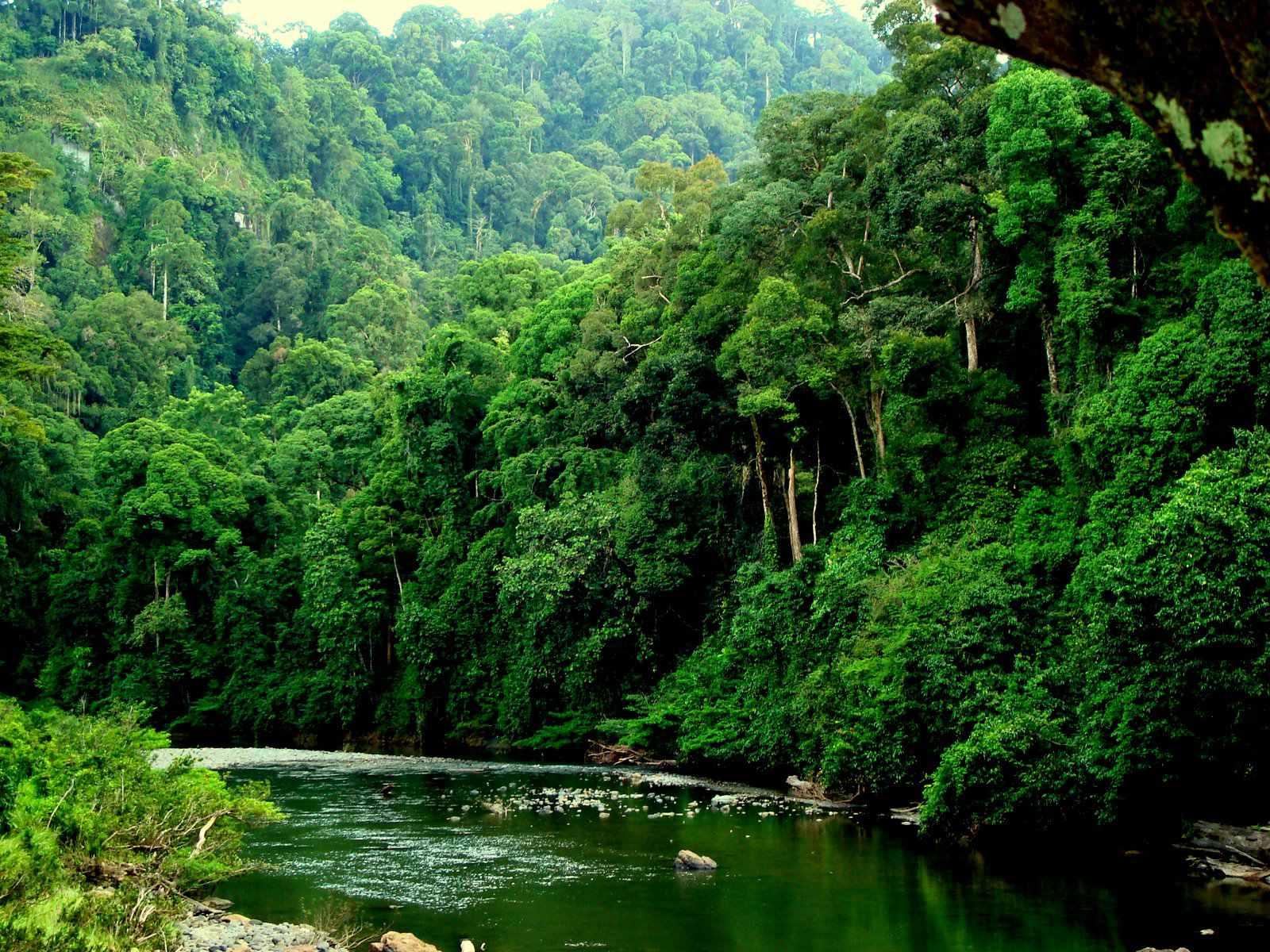 Resultado de imagen de bosque tropical