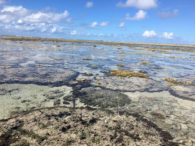 The Lagoon Lady Elliot Island Great Barrier Reef Australia