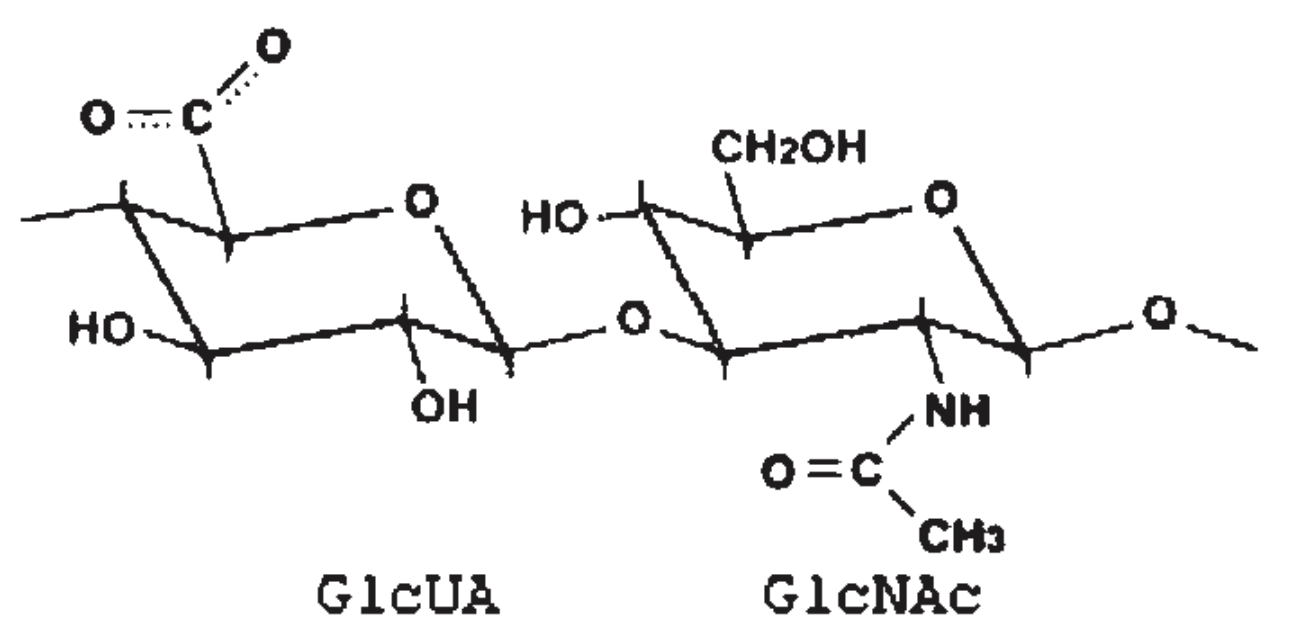 medium resolution of source https www researchgate net figure molecular structure of repeating unit of hyaluronic acid ha fig1 7519315