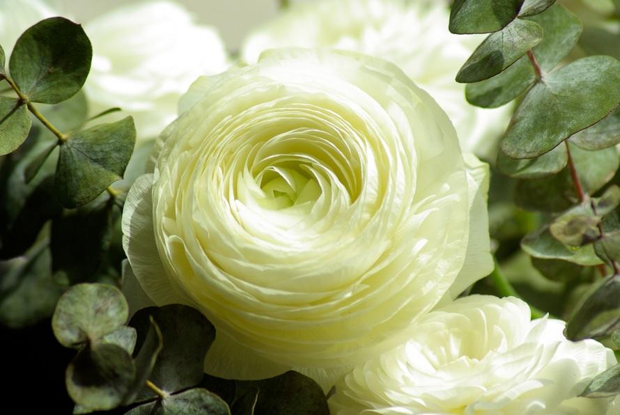 A flor mais bela