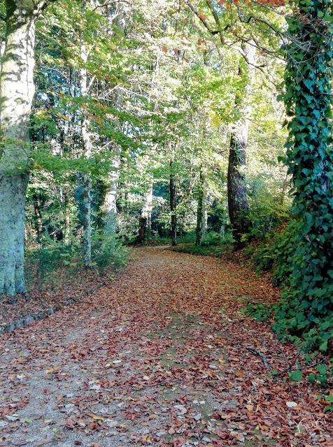Paisagem, Outono, folhas caídas