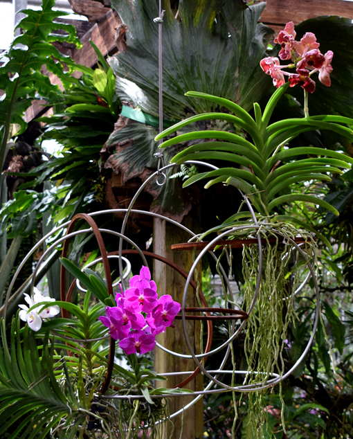 Orchid Daze 2018 | Atlanta Botanical Garden | Photo: Travis S. Taylor