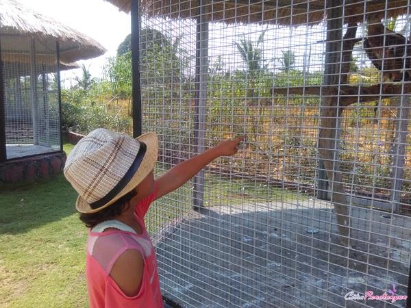safari lagoi, wisata bintan, holiday lagoi, wisata edukasi,