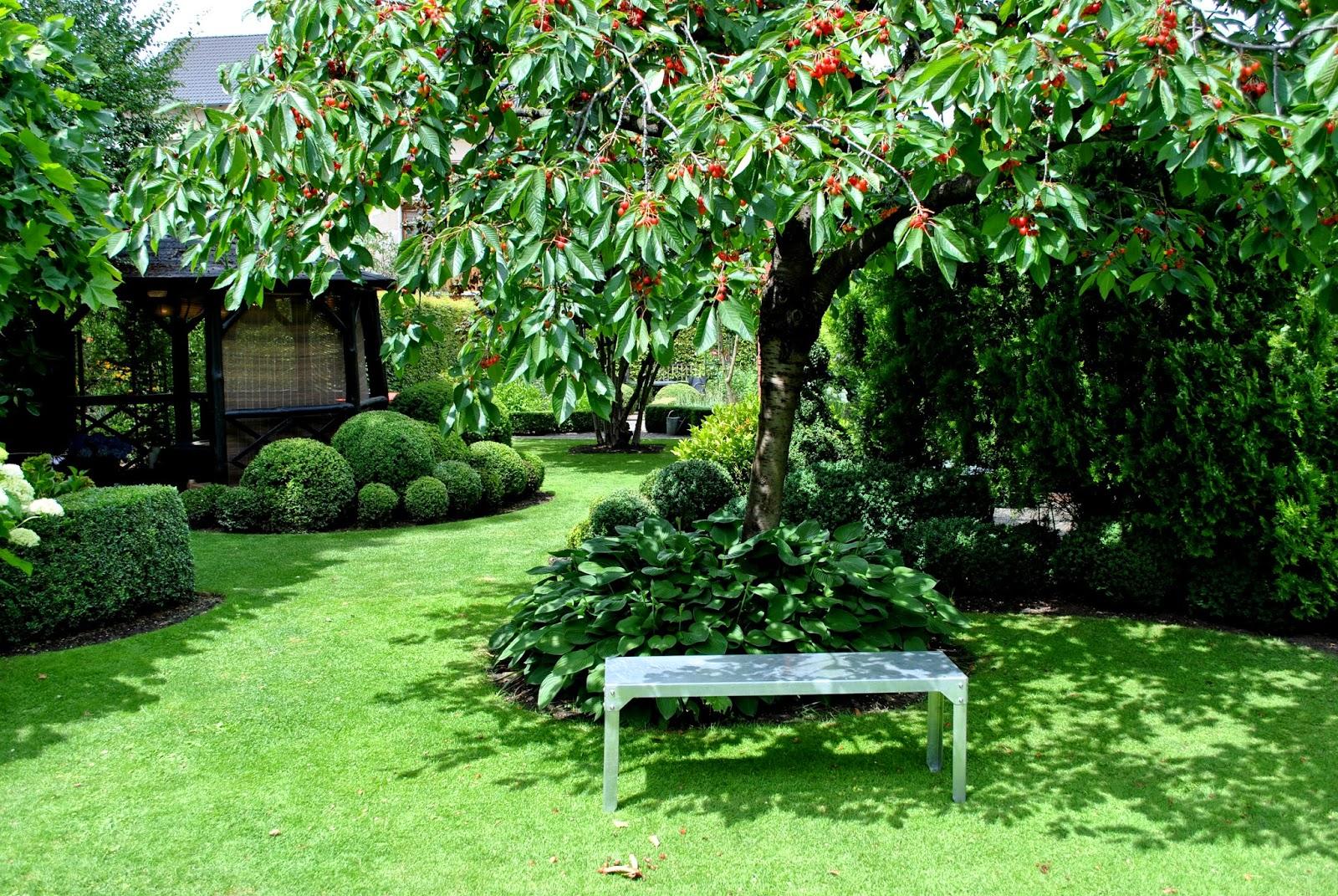 Garten mit Buchskugeln- Funkien im Schatten