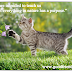 Οι γάτες διδάσκουν!...