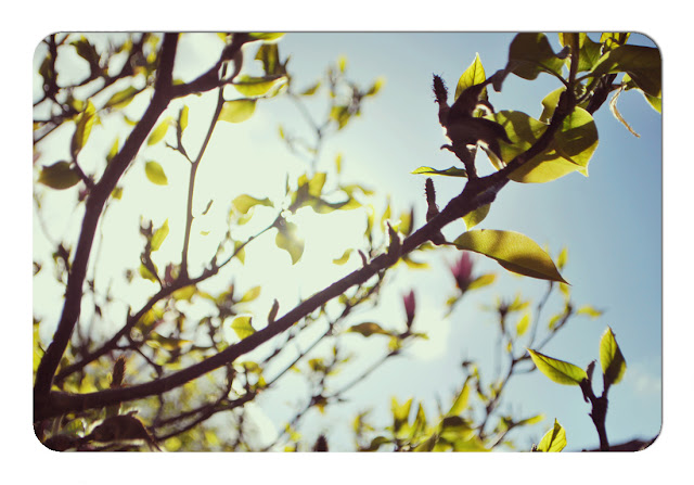 Spring sunshine - London