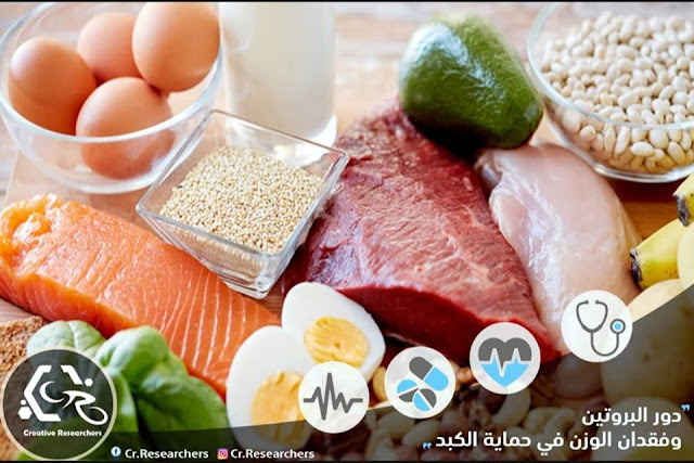 دور البروتين وفقدان الوزن في حماية الكبد