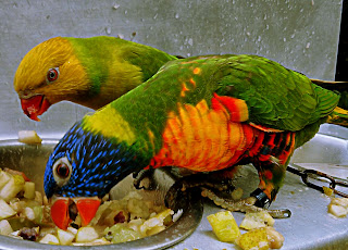 feeding time for the birds