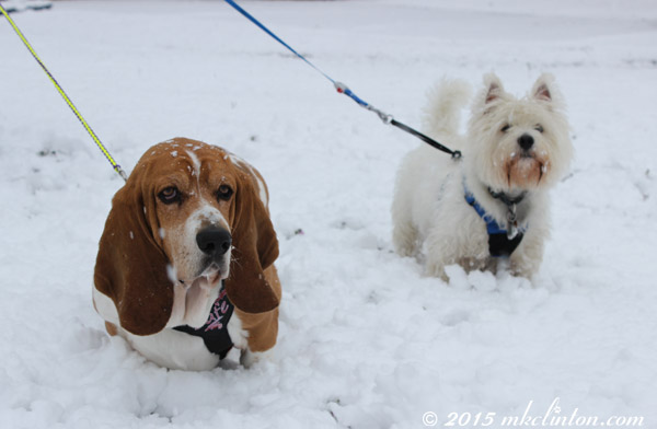 Bayou Dogs in the 2015 Blizzard