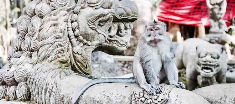 Eat Love Pray, monkey forest ubud, monkey bali, małpy na bali