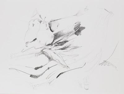 fruit drawing, graphite on vellum
