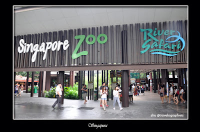 30 Tips dan Panduan Lengkap Liburan ke Singapore Zoo, River Safari, Night Safari dan Jurong Bird Park di Singapura