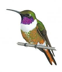 hummingbirds world