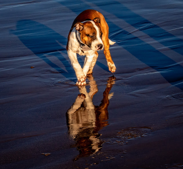 Photo of Ruby reflected in the wet sand