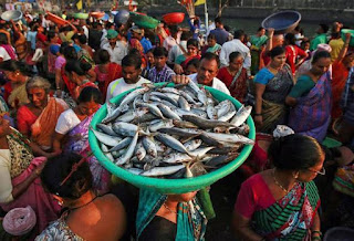 India & China sign agreement to inspect fish meal and fish oil exports