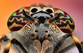 Ojos de insecto