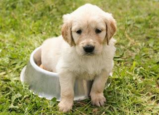 Cara Merawat Anak Anjing