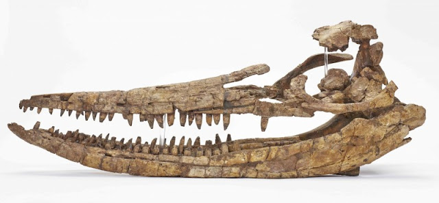 Medical scanner helps to unlock the mysteries of a giant prehistoric marine reptile