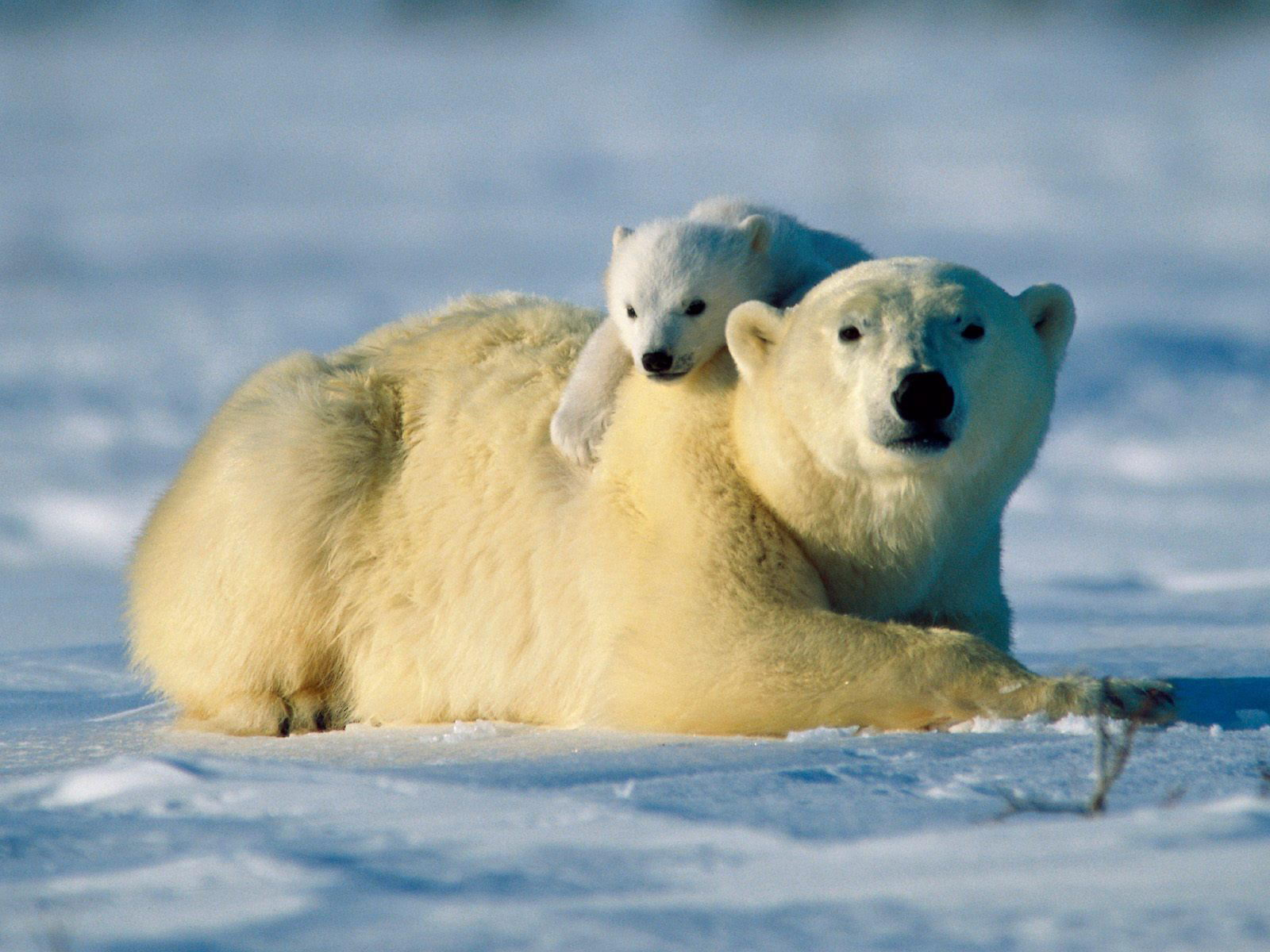 Some Wallpapers Animal Mother And Baby 1