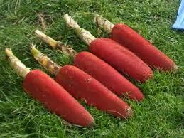 Manfaat buah merah untuk kesehatan