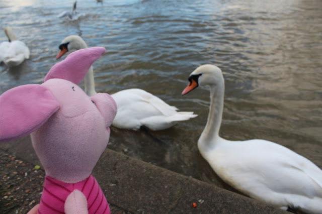 Piglet and swans