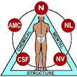 Understanding Kinesiology and Applied Kinesiology