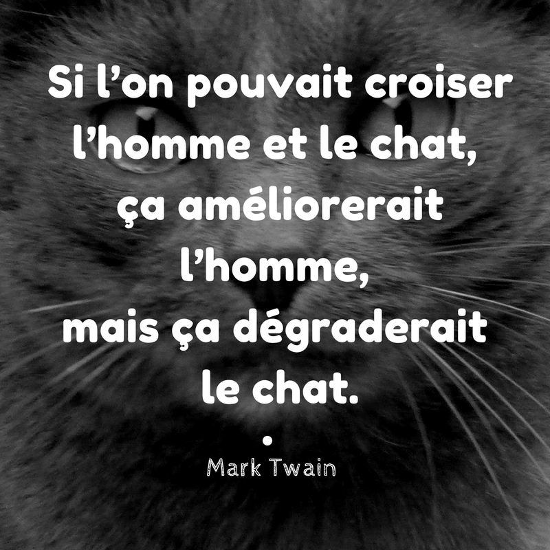 citation, chat, humour, hmour, gris,