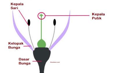 fungsi kepala putik