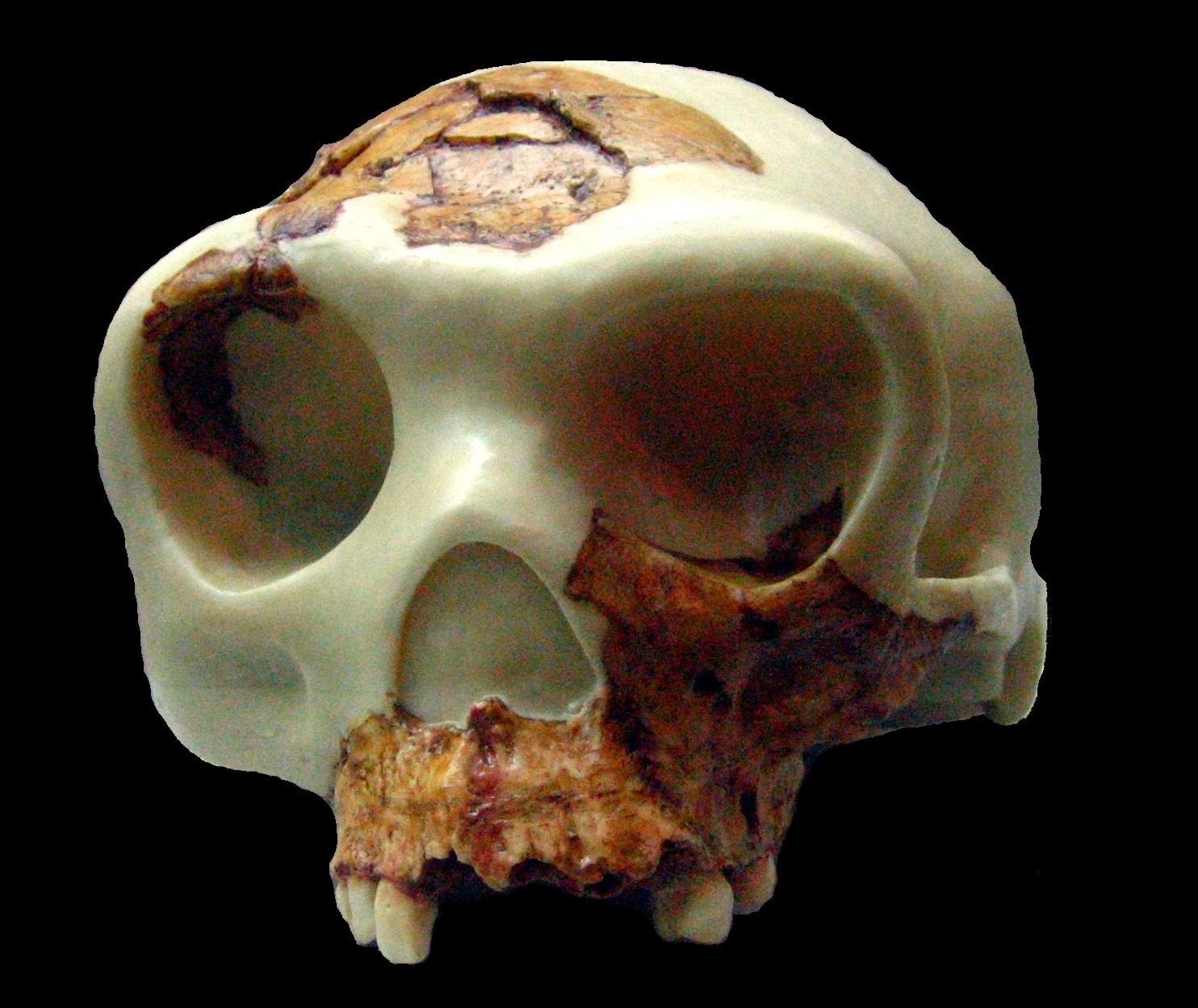 Dating refined for Atapuerca site where Homo antecessor appeared