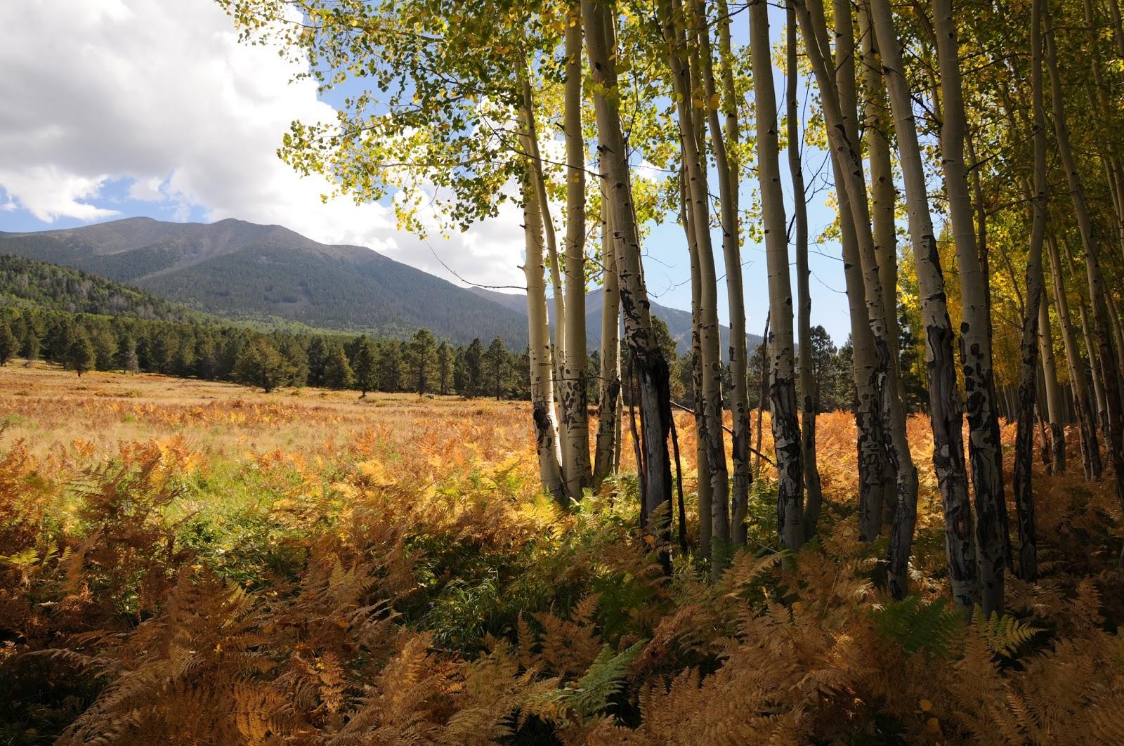 Arizona Hiking: WILSON MEADOW
