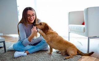 Los perros reconocen si eres bueno o malo - mas torrencito