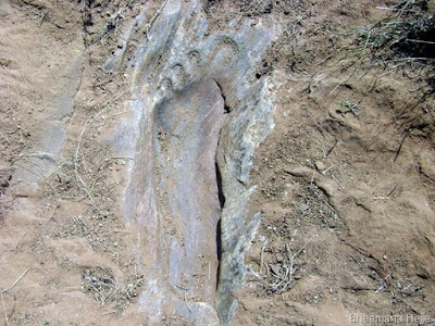 Nephilim Giants and their huge ancient footprints have set in stone.