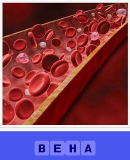 еще 460 слов по венам протекает кровь 3 уровень