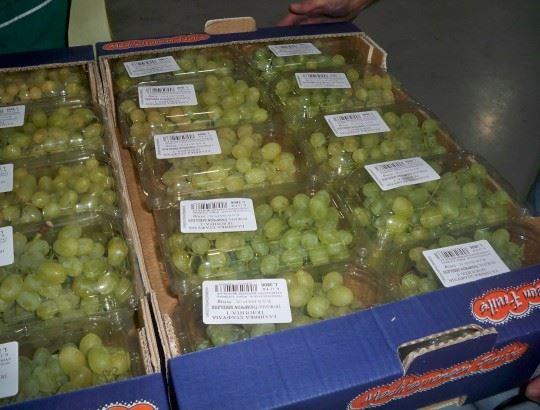 Δωρεάν διανομή φρούτων στον Δήμο Επιδαύρου