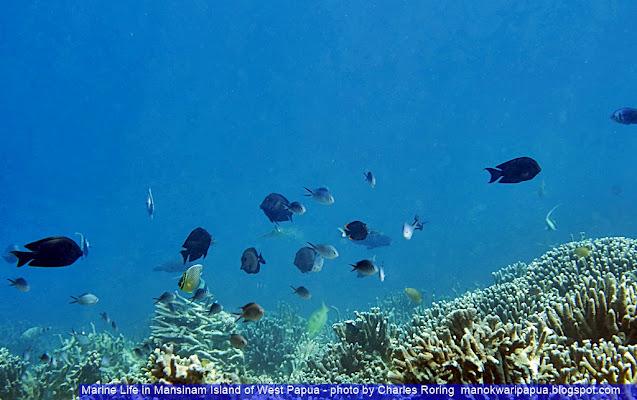 snorkeling photo from Manokwari