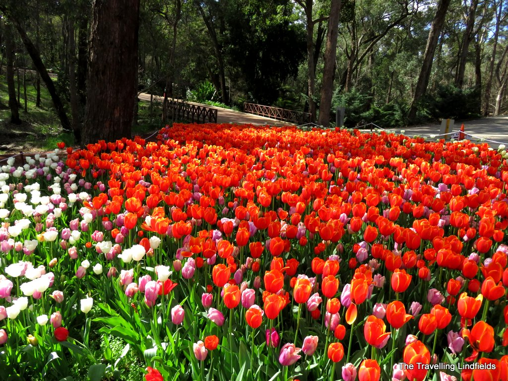 5 DAYS 4 NIGHTS PERTH / BOTANICAL GARDEN - ARALUEN (MID AUGUST TO MID SEP)