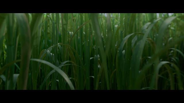 En la Hierba Alta Full HD imagenes