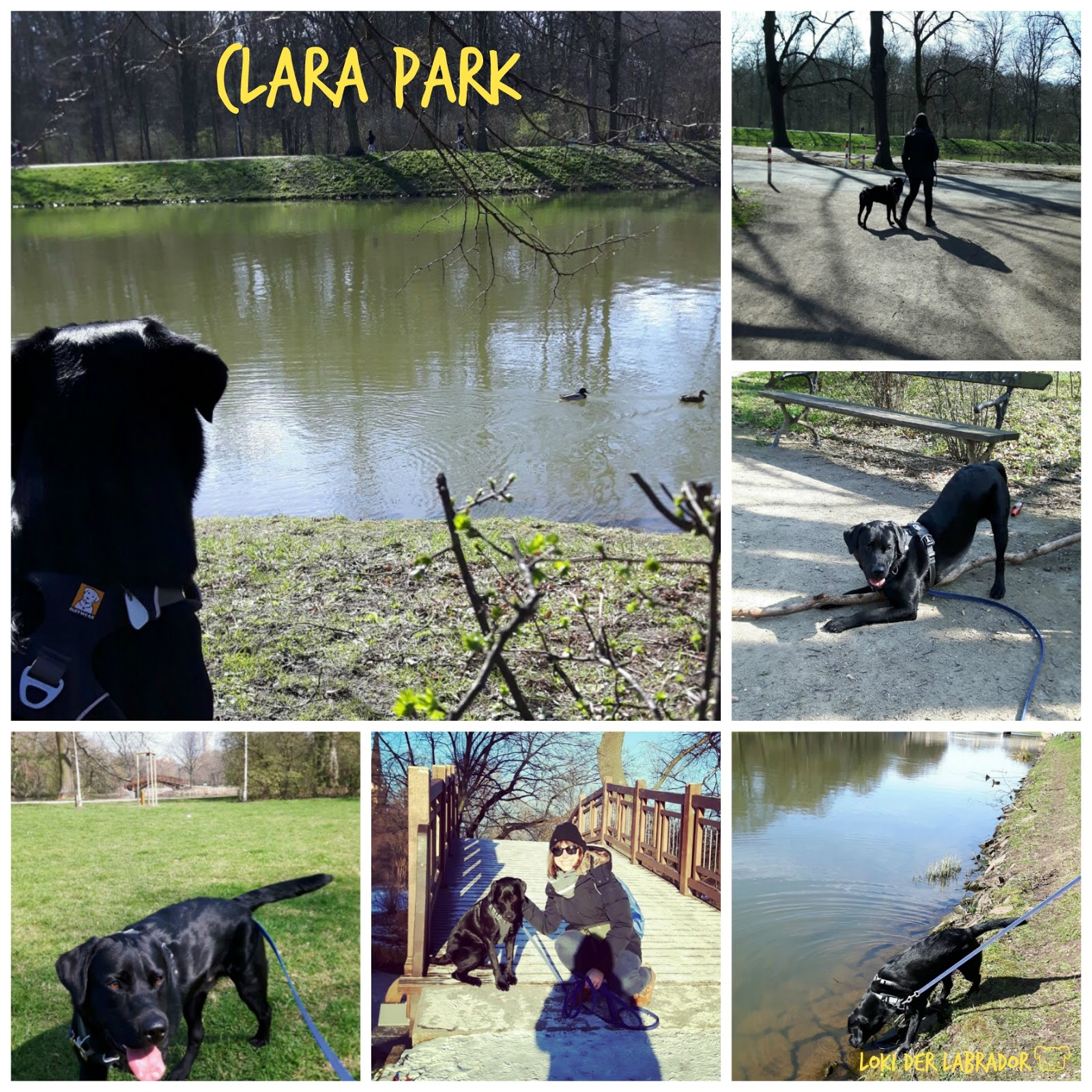 Clara Park Schwarzer Labrador Loki
