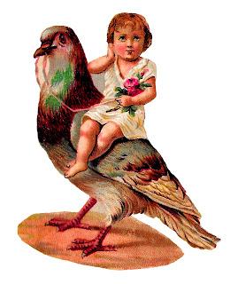 bird baby rose image pigeon illustration clipart download vintage