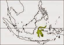 sulawesi hornbill Rhabdotorrhinus exarhatus