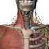 استمتع بدراسة مادة التشريح Anatomy مع الأطلس التفاعلي Visible body  (للويندوز) ,,