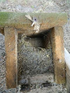 jak zrobić budkę lęgową dla ptaków, slow life