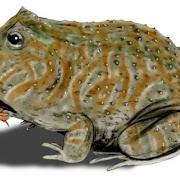 Палеонтологи обнаружили лягушку, которая питалась динозаврами