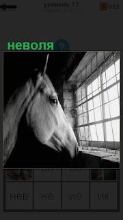 Голова лошади уперлась в окно с решеткой, для нее неволя