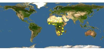 Penyebaran Wilayah Vittatus African Tiger Fish