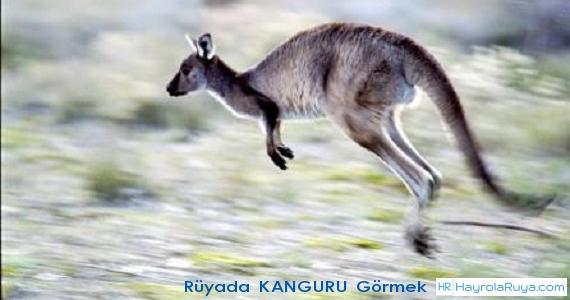 Rüyada Kangurunun Görülmesi rüyada zıplayan kanguru görmek rüyada kangurudan kaçmak rüyada kanguru ısırması rüyada kanguru saldırması görmek rüyada kangurunun saldırdığını görmek rüyada kanguru öldürmek rüyada kanguru sürüsü görmek rüyada kangurunun kovaladığını görmek
