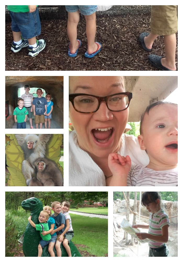 A Staycation Trip to the Zoo