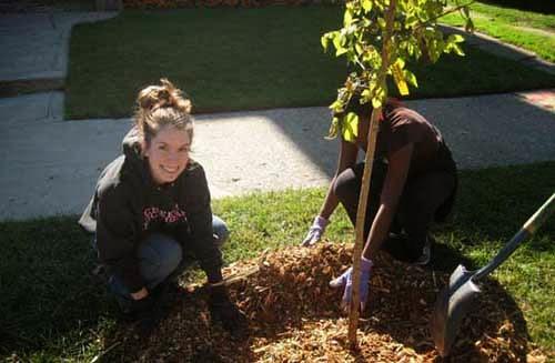 Study Notes  Study Guides Essay - Tree Plantation