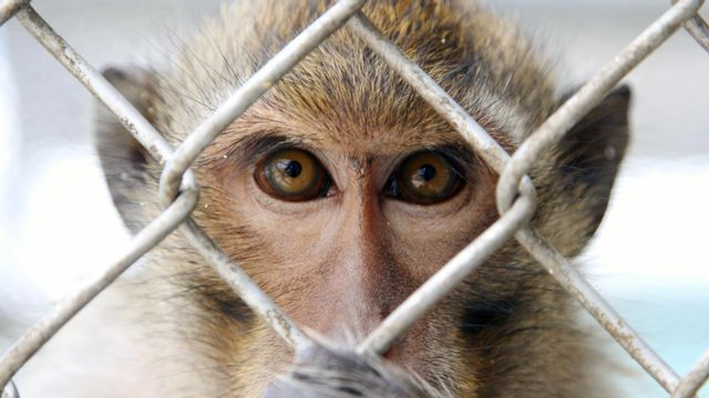 Top 10 Amazing facts in hindi   10 Animals That Have Been Arrested for their serious Crimes