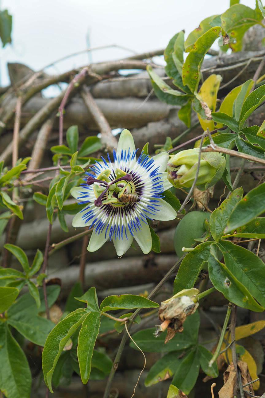 Flowers on Brownsea Island